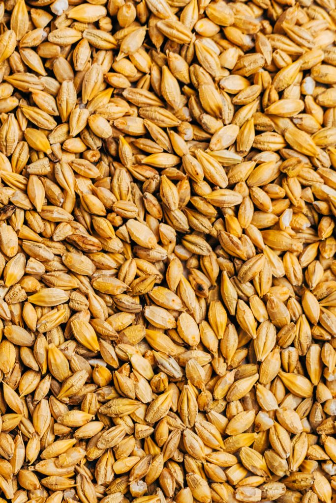 Close up image showing the look and texture of pot barley.
